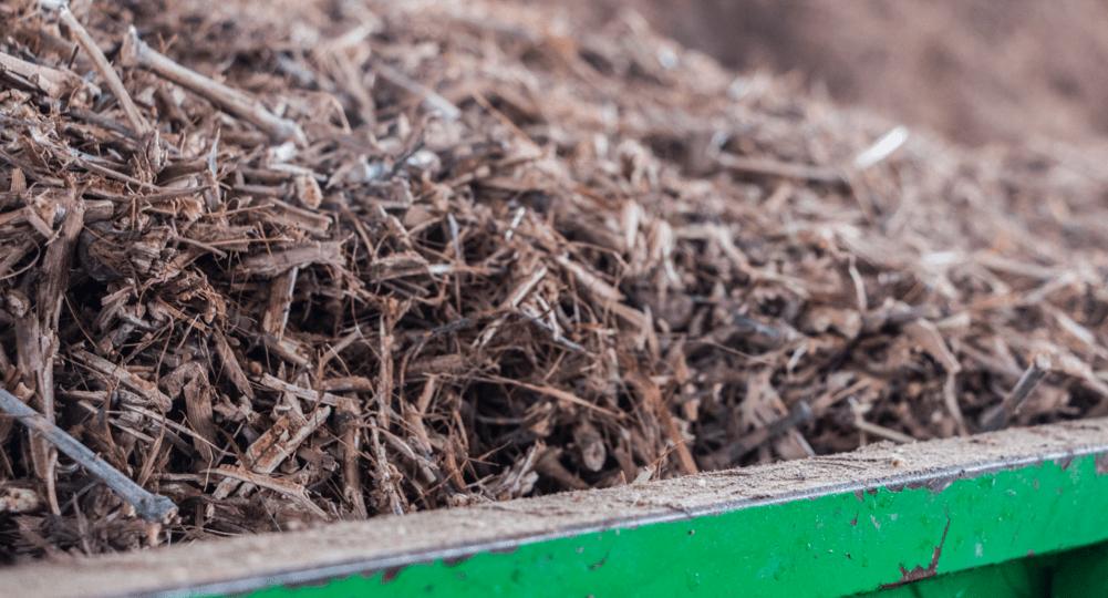 biomassa-_1