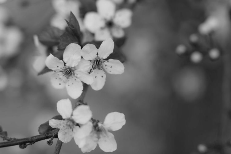 pexels-photo-432360